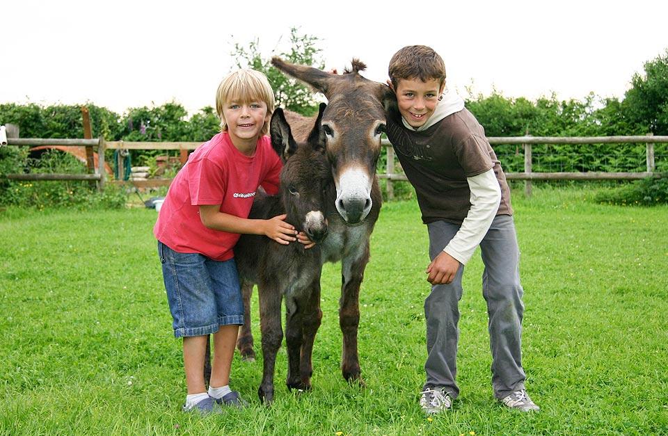 donkey02