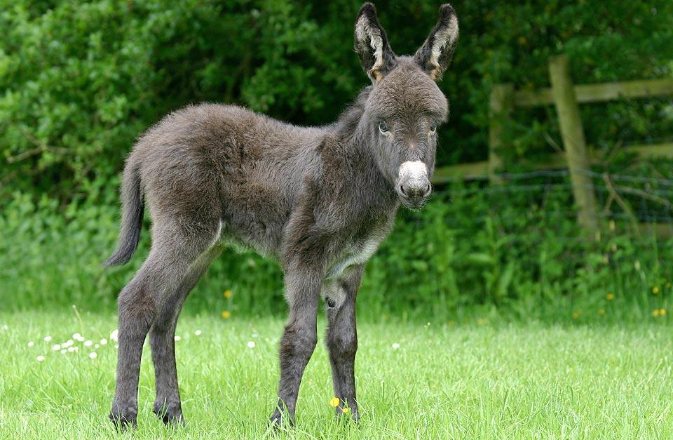 donkey03